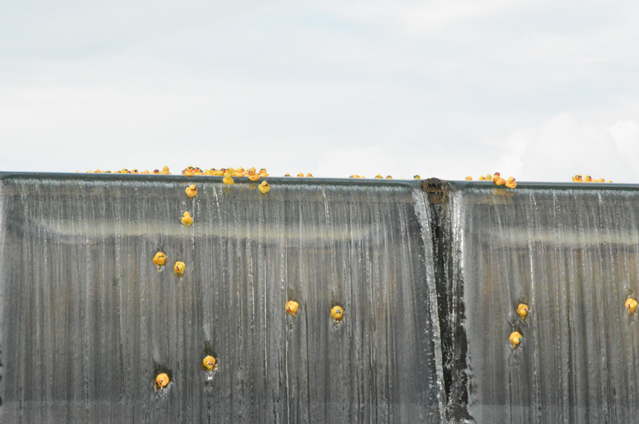 Broadway Ford Idaho Falls >> Thousands attend 25th annual Duck Race   East Idaho News