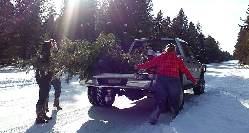 Jewelissa Lowe getting Christmas tree