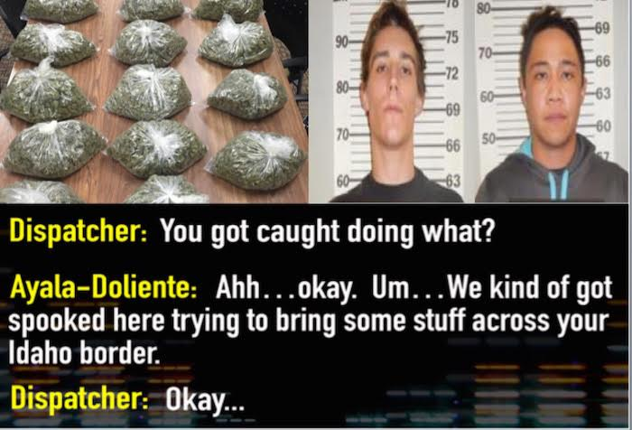 Drug traffickers get high and call the cops to turn