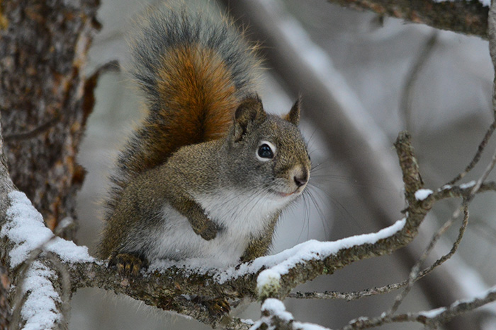 Schiess Chatter Bear Squirrels Know How To Survive Winter East