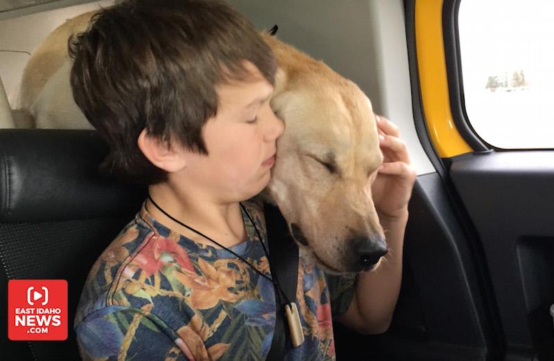 kid dog 1