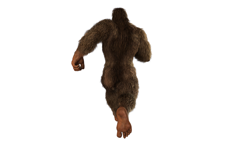research paper on bigfoot Bigfoot, also known as sasquatch, is considered to be a warm-blooded mammal that is half human and half ape bigfoot stands about seven feet tall, and can weigh anywhere from 200 pounds to 400 pounds bigfoot is said to be a very smart and intelligent animal bigfoot sightings first occurred.