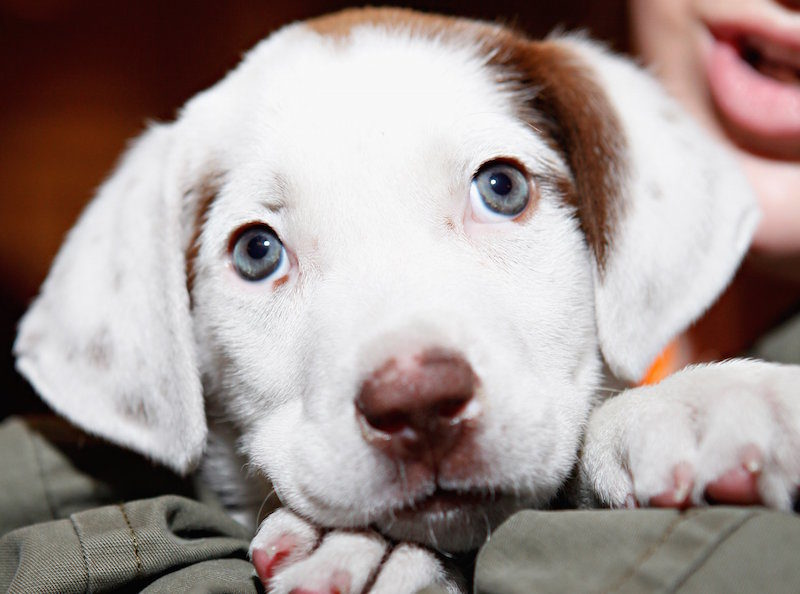 Infection outbreak linked to contact with pet store puppies