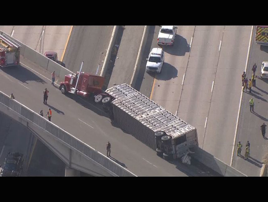UPDATE: Driver of semi that spilled cattle onto I-15 was likely