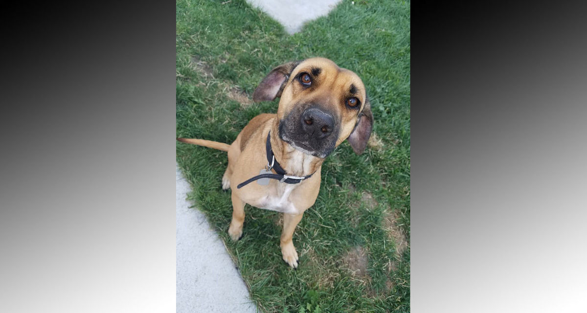 Pocatello Family Searching For Daughter S Missing Service Dog East Idaho News The popular craigslist website in east idaho is a great place to post ads for things you have for sale. pocatello family searching for daughter