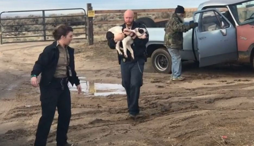 Missing dog rescued after 15 days in the desert | East Idaho News