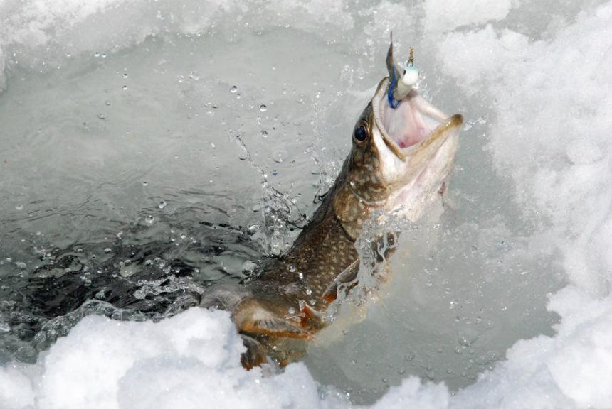 A Beautiful Day Catching Fish At Jackson Lake East Idaho News