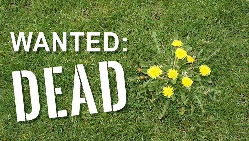 Begone Weeds In My Lawn Why Fall S The Best Time To Kill