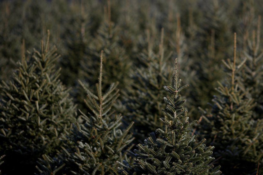 Here's how to dispose of a Christmas tree in your area