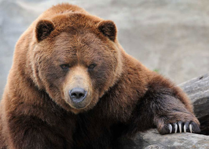 Judge Saves Yellowstone Grizzlies From First Legal Hunt in Decades
