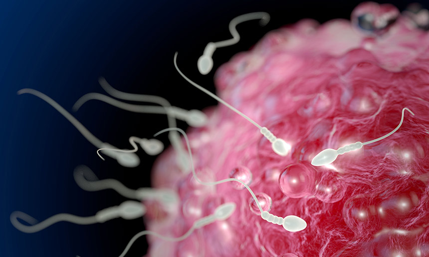 sperm eggs ferility adobe