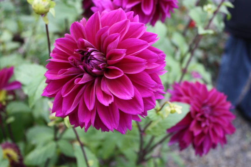 Successfully Growing Annual Flowers In Your Landscape East Idaho