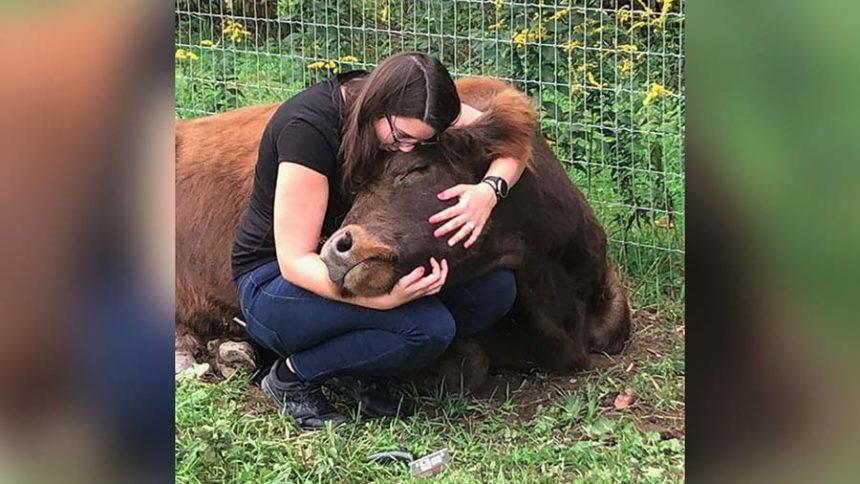 cow cuddling cnn mountain horse farm