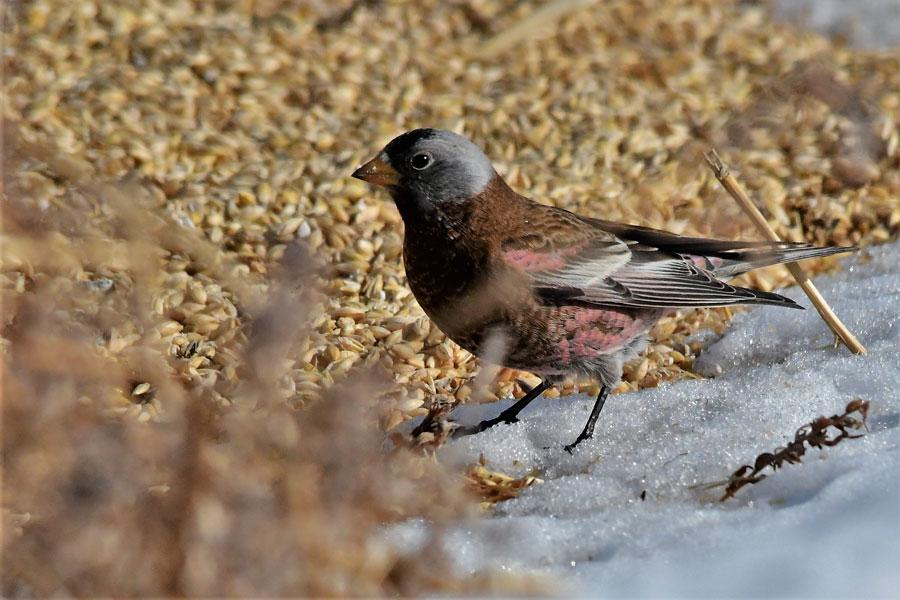 Christmas Bird Count A Huge Success East Idaho News