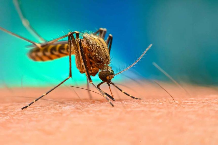 mosquito shutterstock cnn article only