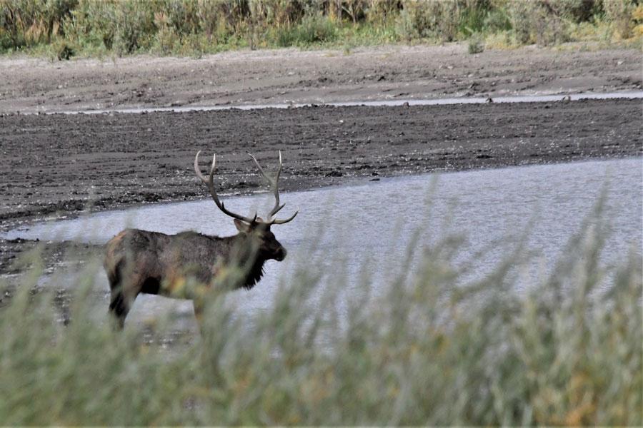 Elk Sandhole 1 19 1