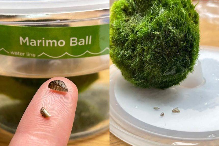 Mussels in aquarium ball