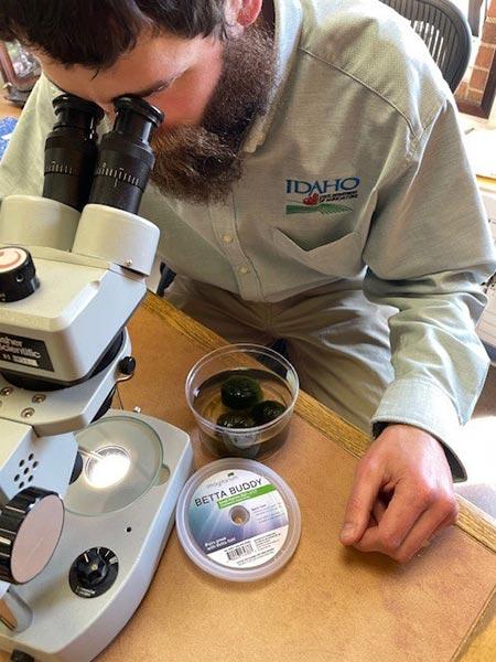 examining mussels