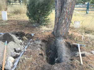 Illegal excavation at Yellowstone