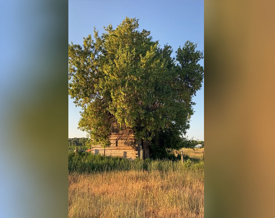 rostan cabin with tree