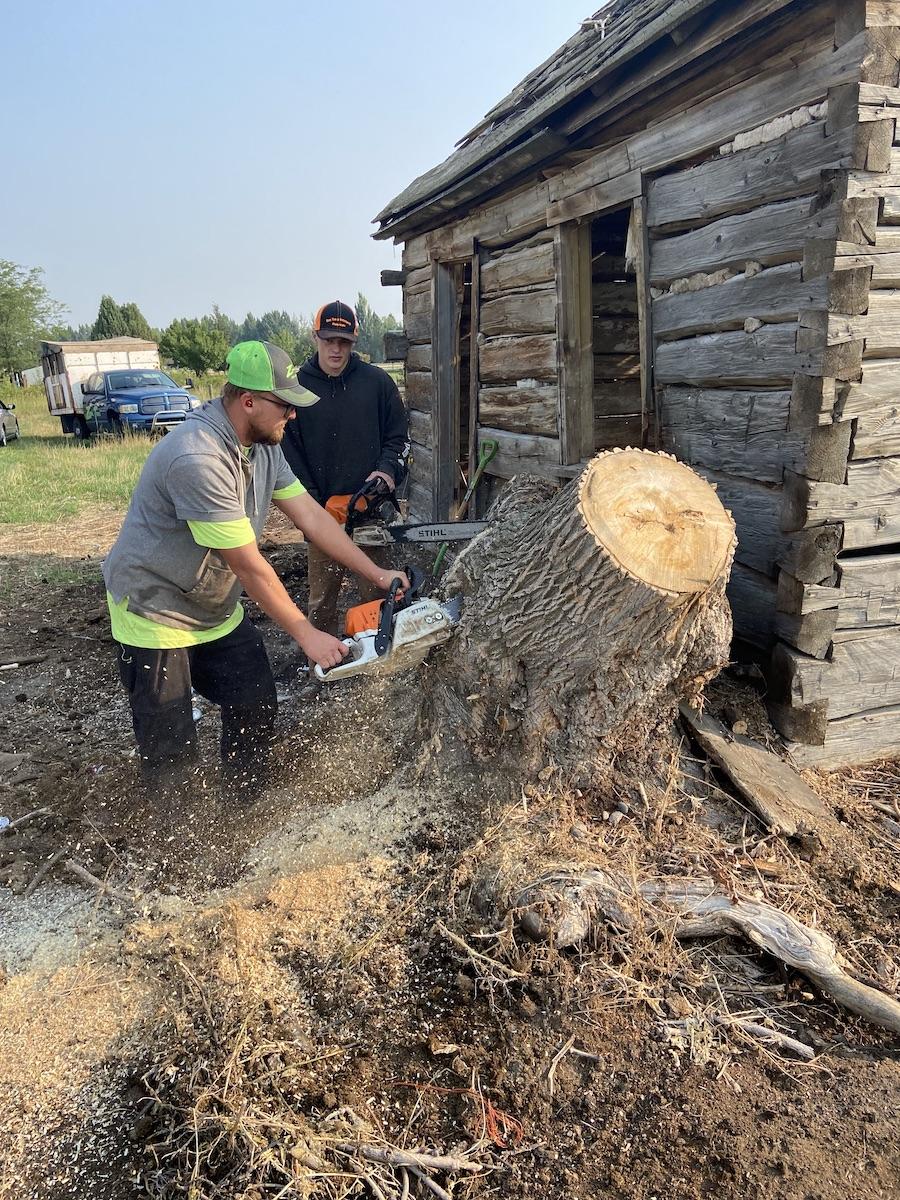 chopping stump
