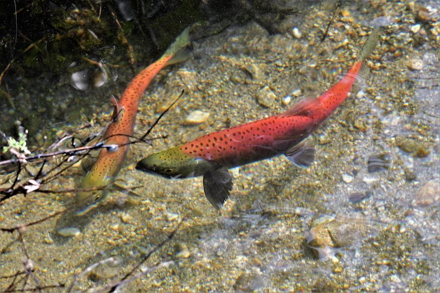 Redfish7 21